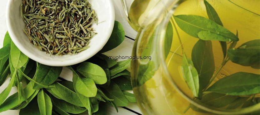 #5. Phương pháp trị mụn cơm bằng lá trà xanh