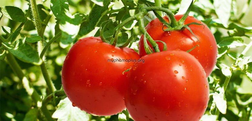 Cách trị mụn ở tuổi dậy thì sử dụng cà chua